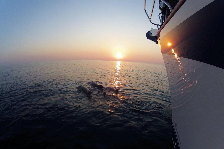 Akdeniz'de sürpriz karşılama