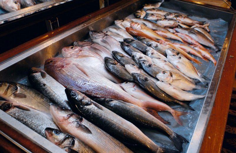 Sinarit balığı merak edilenler